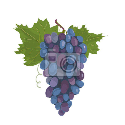 Naklejka Czarny winogron.