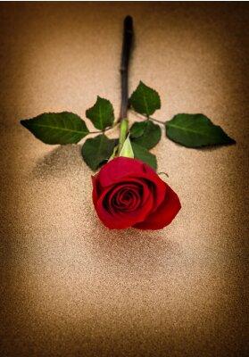 Naklejka Czerwona róża. Kwiat złote tło rocznika