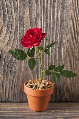 Naklejka Czerwona róża kwiaty na drewnianym tle