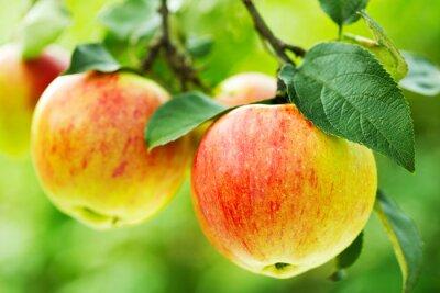 Naklejka czerwone jabłka