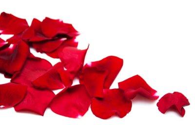 Naklejka Czerwone róże płatki