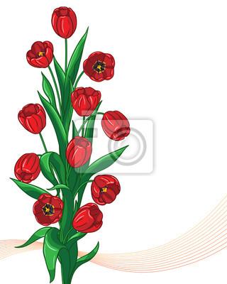 Czerwone tulipany kilka