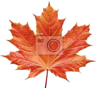 Naklejka czerwony liść klonu