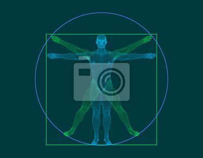 Naklejka Człowiek witruwiański. Model szkieletowy ludzkiego ciała. Ilustracja kontur wektor