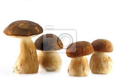 Cztery grzybów borowików