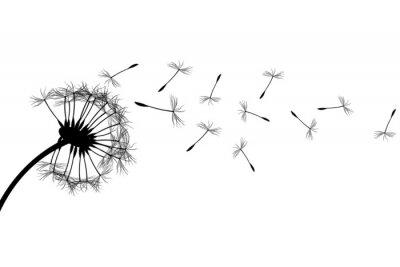 Naklejka Dandelion sylwetka