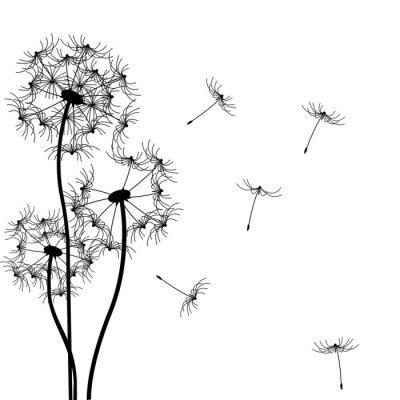 Naklejka Dandelion Vector