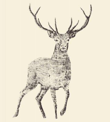 Naklejka Deer grawerowania, vintage ilustracji wektorowych