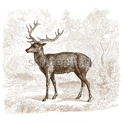 Naklejka Deer - vintage engraved illustration -