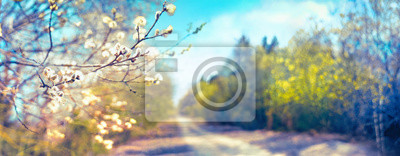 Naklejka Defocused spring landscape. Beautiful nature with flowering willow branches and forest road against blue sky with clouds, soft focus. Ultra wide format.
