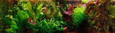 Naklejka Dekoracyjne akwarium