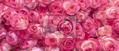 Naklejka Delikatne różowe róże.