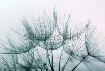 Naklejka Detail of dandelion against white background