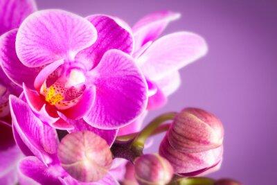 Naklejka dettaglio orchidea