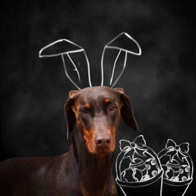Naklejka Doberman z uszami królika