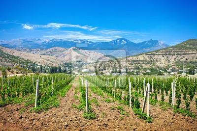 Dolina winnic