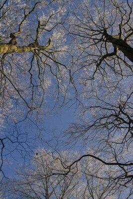 Drzewa mit Eis