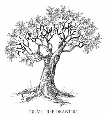Naklejka Drzewa oliwnego samodzielnie wyciągnąć rękę wektor