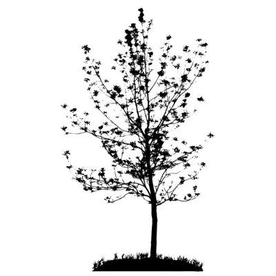 Naklejka Drzewa sylwetka na białym backgorund. Vecrtor ILUSTRACJE