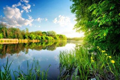 Naklejka Drzewa według spokojnej rzeki