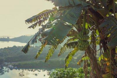 Naklejka Drzewo bananowe, tropikalny krajobraz