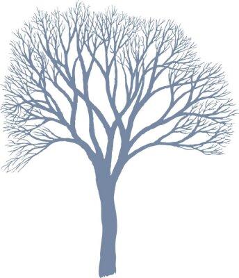 Naklejka Drzewo - Morwa