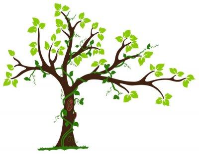 Naklejka Drzewo z liany i winorośli