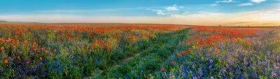 Naklejka Duża Panorama maku i pola bellsflowers ze ścieżką