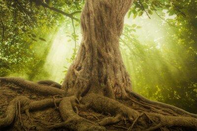 Naklejka duże korzenie i promień słońca w zielonym lesie