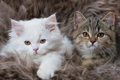 Naklejka dwa kociaki
