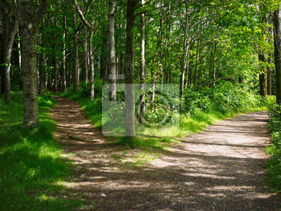 Naklejka Dwie drogi w lesie, Irlandia Północna