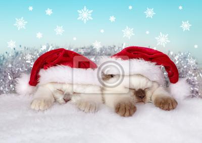 Dwie małe koty sobie kapelusz Mikołaja snem