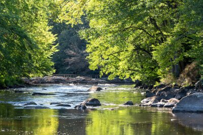 Naklejka Dzika szwedzka rzeka we wrześniu
