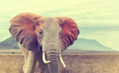 Naklejka Dzikie Słoń afrykański. efekt vintage