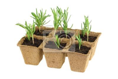 Eco Friendly I Biodegradowalne Doniczki Naklejki Redro