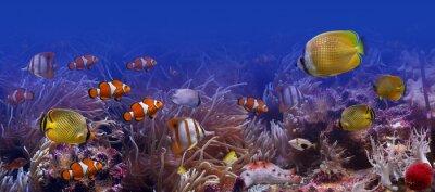 Naklejka Egzotyczne ryby