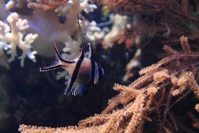 Naklejka egzotyczne ryby rafy