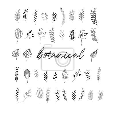 Naklejka elementy ilustracji wektorowych botaniczny doodles. ręcznie rysowane szkic. pozostawia jarzębiny