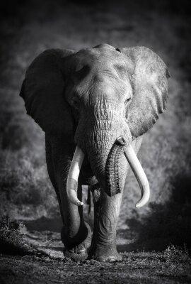 Naklejka Elephant Bull (Artistic processing)