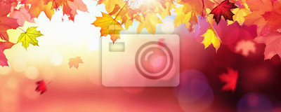 Naklejka Falling Autumn Maple Leaves Naturalne Kolorowe Tło