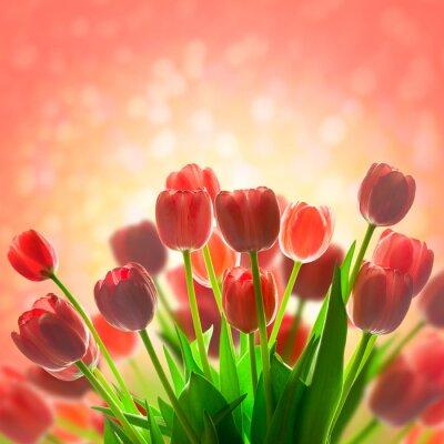 Naklejka Fantastyczna tła tulipany wakacje z pięknym magicznym światłem