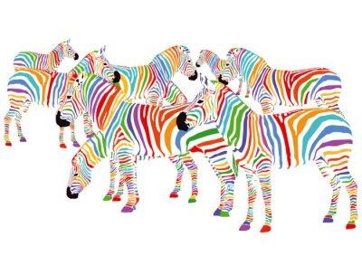 Naklejka Farbenfrohe Zebry