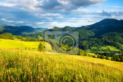 Naklejka Field in the mountains. Summer forest in mountains. Natural summer landscape. Meadow with flowers in mountains. Rural landscape. Mountains landscape-image