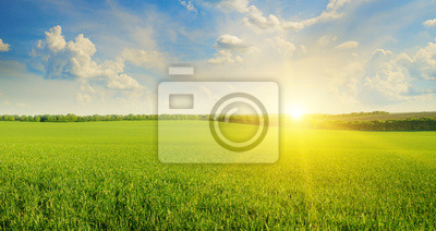Naklejka field, sunrise and blue sky