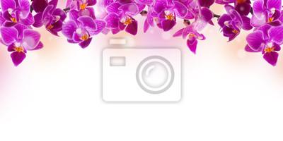 Floral tle tropikalnych storczyków i motyl