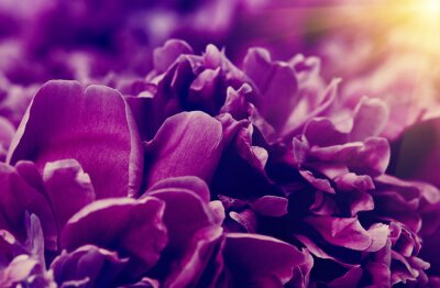 Flower and beautiful petals.