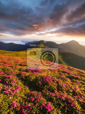 Flowes w górach podczas wschodu słońca. Piękny naturalny krajobraz w okresie letnim