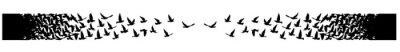 Naklejka Flying birds silhouettes on white background. Vector illustration. isolated bird flying. tattoo design.