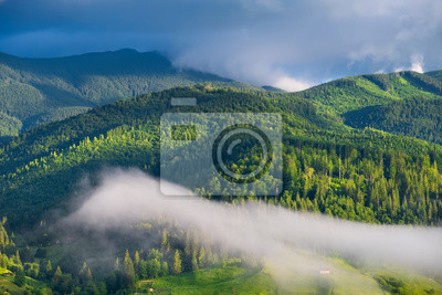 Naklejka Forest in the mountains. Summer forest in mountains. Natural summer landscape. Forest in fog. Rural landscape. Mountains landscape-image