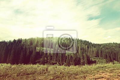 Naklejka Forest Landscape retro
